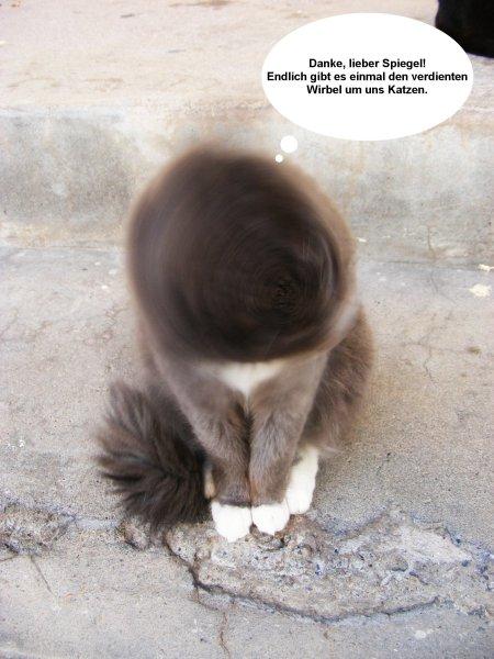 Ein Hoch auf Deutschlands Katzenblogs!